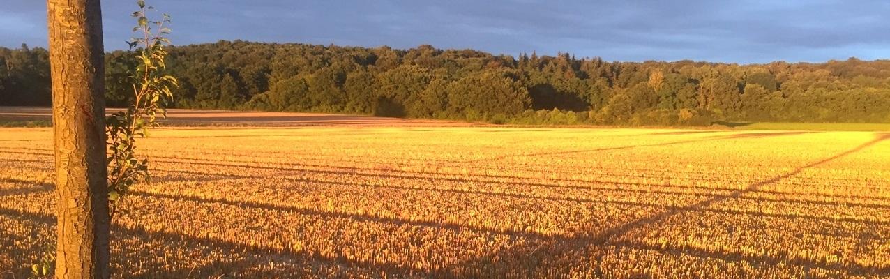 landwirtschaftlicher pachtvertrag download